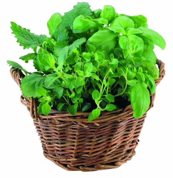 Корзина Herbs